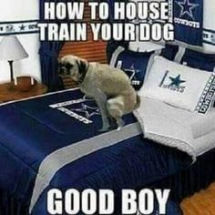 With football starting up, lets get some funny football pictures posted up. Starting off with the Dallas Cowboys. Funny Football Pictures, Funny Football Memes, Funny Nfl, Nfl Memes, Funny Sports Memes, Sports Humor, Funny Memes, Dallas Memes, Dallas Cowboys Jokes