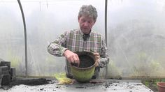 HOW TO GROW FREESIA Mark Abbott-Compton in Cornwall