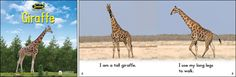 Giraffe—by Claire Vial & Graham Meadows Series: Zoozoo Into the Wild GR Level: C Genre: Informational