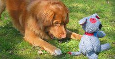 dog toy testing