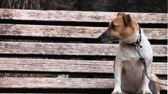 Come creare un vestito per il cane con materiali di recupero
