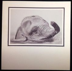 Pencil elephant on Craftsuprint designed by Debra Jenkinson - made by Carol Bath - This gorgeous sheet was resized and printed out on to photo paper. The topper was attached to a white 7 x 7 card. Love the classic look. - Now available for download!