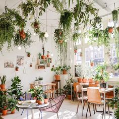 """9,524 Likes, 138 Comments - Bri ✌️ (@burtsbrisplease) on Instagram: """"I feel like I could totally live and die happily in this little plant shop in Amsterdam but then I…"""""""