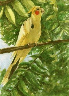 "Original Watercolor Art SFA 7"" x 5"" Cockatiel Bird Parrot Painting Mixed Media #Realism"
