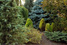 evergreen foliage, mixed evergreen foliage border