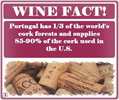 Where do Corks Come From? #trivia