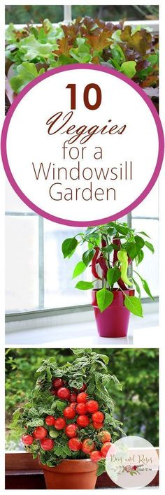 10 Veggies for a Windowsill Garden - Bees and Roses| Vegetable Gardening, Gardening, Gardening Tips and Tricks, Indoor Gardening, Indoor Gardening Tips and Tricks, Popular Pin #IndoorGardening #Gardening #veggiegardens #rosesgarden