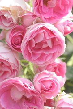 Beautiful roses.