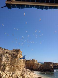 Gaivotas na praia do castelo