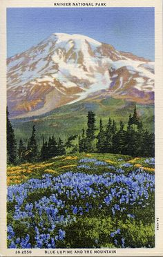 Mt Rainier postcard