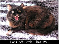 Funny shot of Snickers, couldn`t resist the caption Back Off, Caption, Cats, Funny, Photos, Animals, Gatos, Pictures, Animales