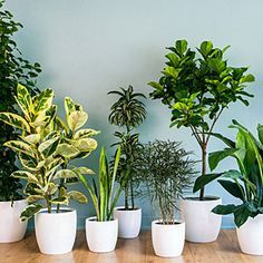 Chic House Plants & Tips on Care