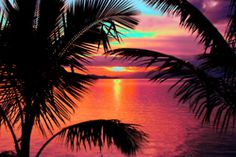 New palm tree sunset wallpaper paradise ideas Beautiful Sunset, Beautiful World, Beautiful Places, I Love The Beach, Summer Of Love, Pretty Beach, Palm Trees Tumblr, Sunset Tumblr, Photos Black And White