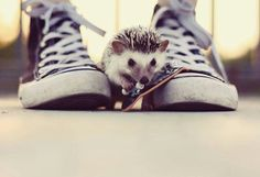 Need to do photos like this when I get my own hedgie.♡