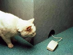 Cat and... Mouse?