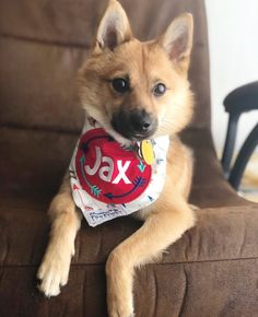30067b16082c Precious Paw Prints Boutique · Personalized Dog Bandanas · Look at Jax slay  in his On Point Personalized Dog Bandana 🤩🏹 • —>