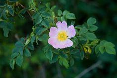 9 kerti virág, amit napos helyre is ültethetsz és még locsolni sem kell! - Bidista.com - A TippLista! Purple Hibiscus, Begonia, Flower Beds, Landscape, Rose, Plants, Gardens, Flowers, Scenery