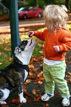 Sharing brings us togehter #english #bulldog #englishbulldog #bulldogs #breed #dogs #pets #animals #dog #canine #pooch #bully #doggy #love #friends