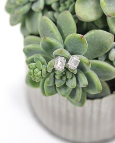 Eco-Friendly Earrings set with conflict-free diamonds! These emerald cut halo earrings are to die for!