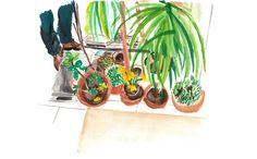 Plants Cassandre Montoriol