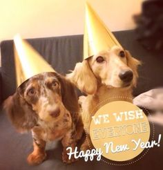 ❤ happy new year doxies