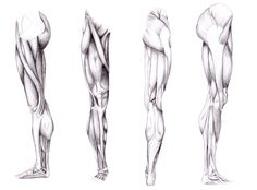 16  Images For   Leg Muscle Reference    Leg Muscle Reference