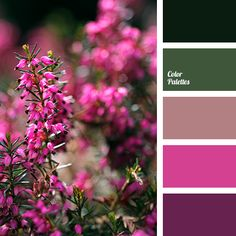 """dusty"" pink, bright pink, color matching, dark green, deep pink, green color, olive color, pink color, purple color, shades of green, spring color palette, violet color."