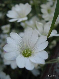 i love white...
