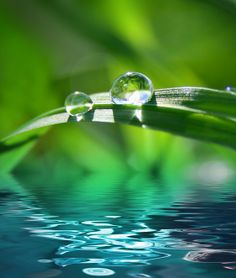 Grass with water drop - highlighting the importance of water pollution prevention