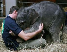 25) Hugging a baby elephant should be on everyone's bucket list.