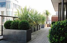 Brilliant Design of Terrace Garden completed with Large Garden Planters including Tropical Plants on Wooden Flooring in the Rooftop Patio with Amazing Building City View Around - The Elegant View of a Terrace Garden Design Patio, Rooftop Design, Balcony Design, Plant Design, Exterior Design, House Design, Balcony Plants, Patio Plants, Outdoor Planters