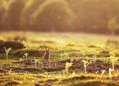 Alex Saberi is a National Geographic photographer from London. He began photography as a hobby by mainly taking photos of Richmond Park.