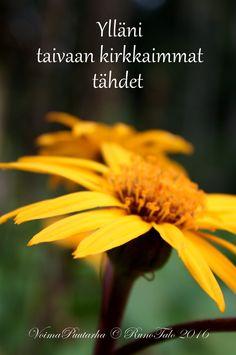 RunoTalon voimapuutarha: Voimaruno & voimakortit viikko 49: Tähti