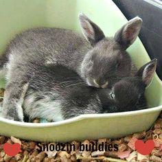 Snoozin buddies