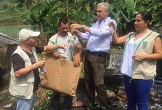 Carder hace control biológico con avispas en La Florida