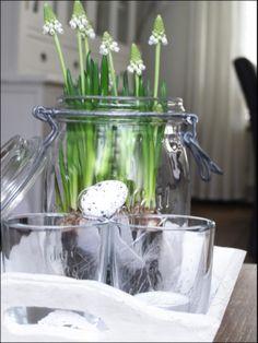 ⚘  witte druifjes in weckpot / spring