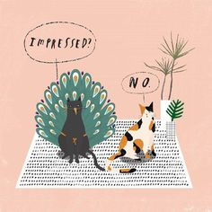 Cats illustration, pink, peacock, cute, are you impressed. No. Funny