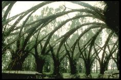 More arboreal architectural awesomeness, here brought to you by German architect Marcel Kalberer and the Sanfte Strukturen group. Living willow architecture.