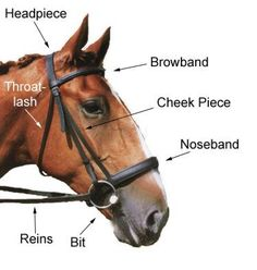 3a9dd299df3ad73b6727b2f2ac5cc241 horse camp horse bridle 30 best bits and bridles images on pinterest horse bridle
