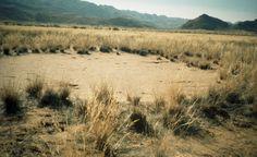 Fairy circle-Marian Fluss-Namibia