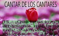 JESÚS PAN YVIDA: CANTAR DE LOS CANTARES