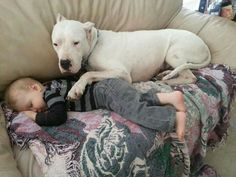 My dogo does this with my baby. #DogoArgentino