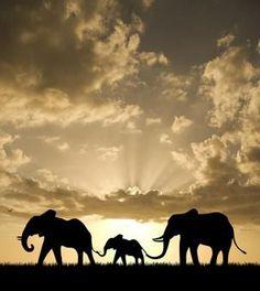 Mama, Papa and Baby Elephant