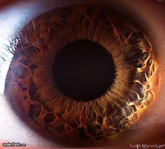 Blog de cursoiridologia : IRIDOLOGIA - CURSO DE IRIDOLOGIA A DISTÂNCIA, ESTUDO DA ÍRIS - 05