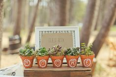 Guest book display with potted succulents spelling out the couple's last name