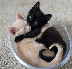 Let see of cat bath/wet cat, Cats are cute and cuddly animals. The independent nature of makes them an ideal choice as pets. Baby Animals Super Cute, Cute Baby Cats, Cute Little Animals, Cute Cats And Kittens, Cute Funny Animals, Kittens Cutest, Kitty Cats, Cat Hug, Small Kittens