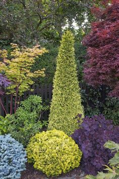Backyard isn't going to be there for a specific season alone. A little backyard doesn't imply it cannot be appropriately designed to produce the sort of landscape you prefer to. Small Evergreen Garden Ideas, Evergreen Landscape, Evergreen Trees Landscaping, House Landscape, Landscape Design, Landscape Plans, Garden Front Of House, Flower Garden Design, Flowers Garden