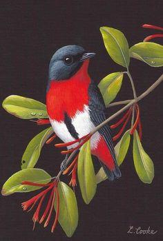 'Australian Mistletoe Bird', by Lyn Cooke www.artpublishing… www. Cute Birds, Pretty Birds, Beautiful Birds, Exotic Birds, Colorful Birds, Bird Drawings, Animal Drawings, Bird Artwork, Bird Paintings