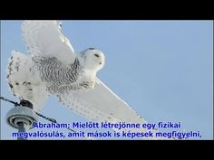 (98) Abraham Hicks - Meglep, hogy beteg vagyok (2014.09.06) - YouTube Abraham Hicks, Youtube, Animals, Animales, Animaux, Animal Memes, Animal, Animais, Dieren
