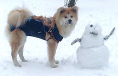 Hopi and the snowman